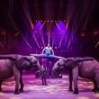 """""""SURPRISE"""" Le nouveau spectacle du Cirque d'hiver Bouglione : Instants par Alexis Jehl 2/3"""