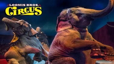 The Loomis Bros. Circus is taking place at Bradenton Convention Center in Palmetto.