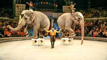 Slovakia is another European country where circus with animals was banned