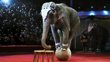 New law would open the return of animals to the circuses in Mexico